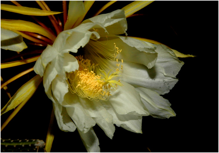 cactus%20dg%202.jpg