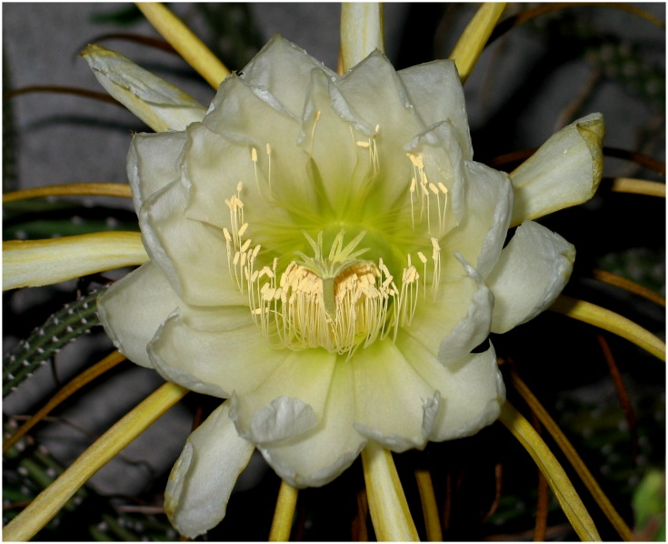 cactusdg.jpg